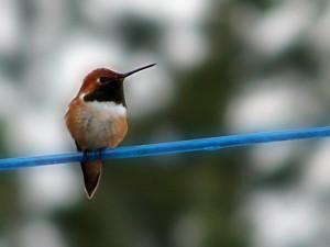นกที่เล็กที่สุดของโลก