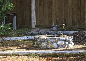 Cougar odpočíva v Backyard