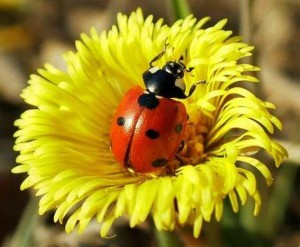 Ladybug Plant Sale