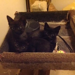 newest-kittens