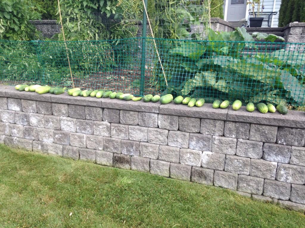 Free Cucumbers